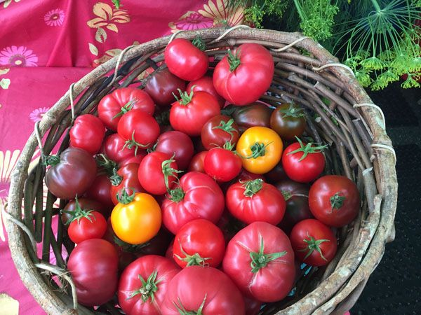 Tomatoes from Laughing Apple Farm